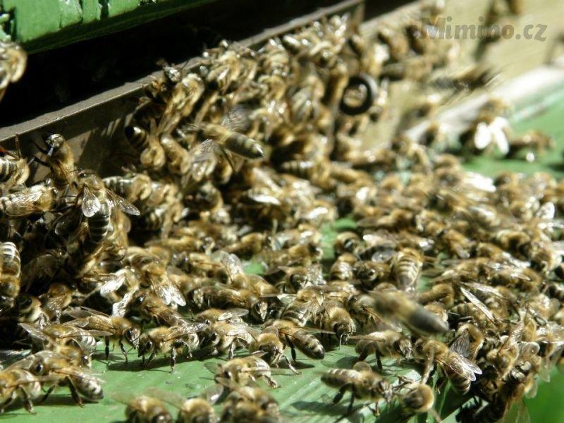 Medový deníček - Ostravský med vs. bio med