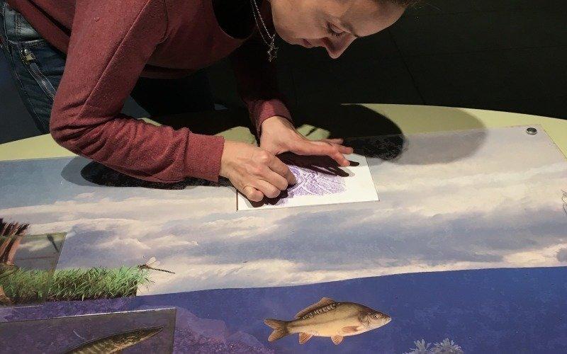 Frotáž rybích šupin – kreativní aktivita v Zemědělském muzeu. Zdroj: eMimino