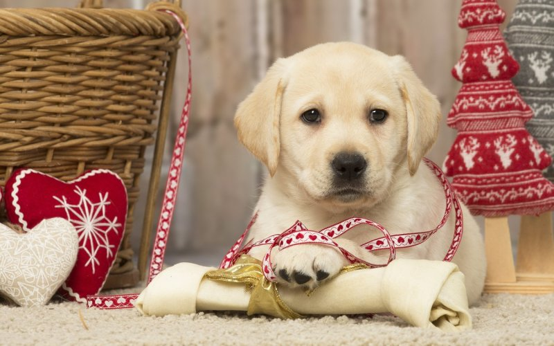 Vánoční dárek pro někoho, kdo právě začal chodit