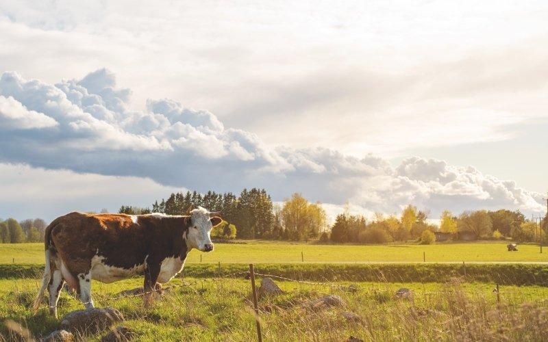 Dodavatelé mléka jsou pečlivě vybíráni. Zdroj: www.nutrilon.cz