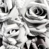 Ikonka uživatele pinkflower88